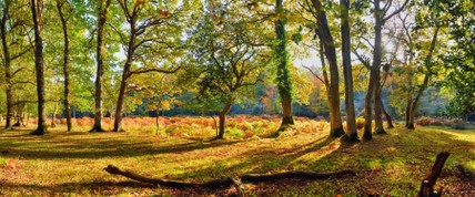 42-autum-forest-panoramic-photography.jpg